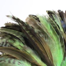 Chinchilla Full Coque Absinthe Green Feathers